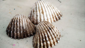 Sea shells collection Stock Photography