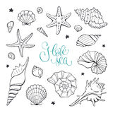 Sea shells collection. Hand drawn sea shells and stars collection. Marine illustration for coloring books. Shellfish outlines  on white background Stock Photography