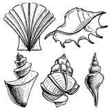 Sea shells collection Royalty Free Stock Images
