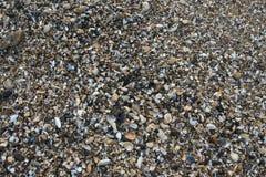 Sea shells Stock Photos
