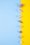 Sea shells on colored backgrounds with negative space, top view Royalty Free Stock Images
