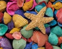 Starfish on heap of colorful seashells stock photography