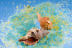 Sea shells on colorful salt grains. Stock Photos