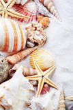 Sea shells. Colorful sea shells, sunny background Royalty Free Stock Images
