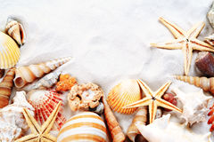 Sea shells. Colorful sea shells, sunny background Royalty Free Stock Photography