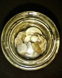 Sea shells in a container. Beautiful small sized sea shells stock photos