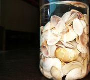 Sea shells in a container. Many sea shells of different shape and size Royalty Free Stock Photo