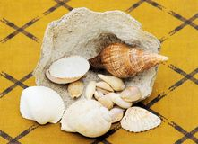 Sea shells and coral Stock Images