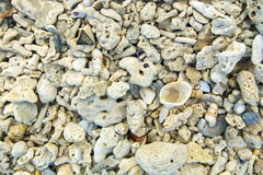 Sea shells and coral. Stock Images