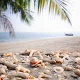 Sea shells and coral fragments on sandy beach with blurred tropi Stock Photography