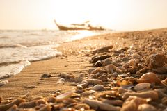 Sea shells and coral fragments sea debris on golden beach mornin Royalty Free Stock Image