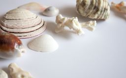 Sea shells and corals background stock photography