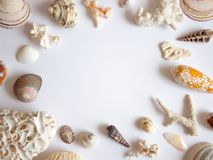 Sea shells and corals frame stock photo