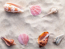 Sea shells and crab on beach sand for summer and beach concept. Stock Image