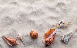 Sea shells and crab on beach sand for summer and beach concept. Stock Photos
