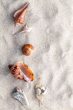 Sea shells and crab on beach sand for summer. Royalty Free Stock Photos
