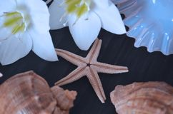 Sea shells on a dark background. Decorations for decoration stock image