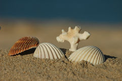 Sea shells and dead coral. Different sea shells with the ocean as background Stock Photo
