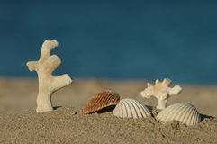 Sea shells and dead corals. Different sea shells and dead corals with the ocean as background Stock Photo
