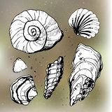 Sea shells decorative icons Royalty Free Stock Photos