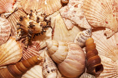 Sea shells details Royalty Free Stock Photos