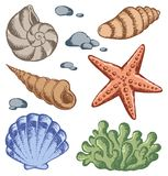 Sea shells drawings 1 Stock Photo