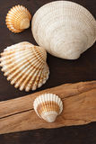 Sea shells and envelope. Sea shells and air mail envelope on brown fabric background and wood Royalty Free Stock Photography