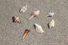 Sea shells exposition on the sand, background stock photography