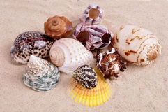 Sea shells on a fine yellow sand background Stock Image