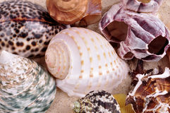 Sea shells on a fine yellow sand background Stock Images