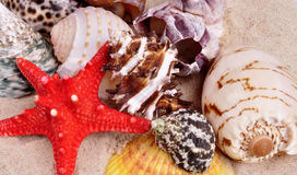 Sea shells on a fine yellow sand background Royalty Free Stock Photos