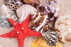 Sea shells on a fine yellow sand background Stock Photos