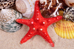 Sea shells on a fine yellow sand background Stock Photo