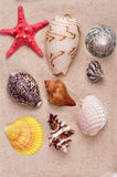 Sea shells on a fine yellow sand background Stock Photography
