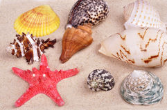 Sea shells on a fine yellow sand background Stock Photo