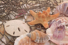 Sea Shells and Fishing Net Stock Photo