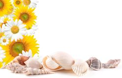 Sea shells and Flowers Frame Royalty Free Stock Photo