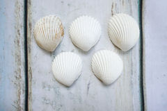 Sea shells form olympic rings. On wooden background Royalty Free Stock Images