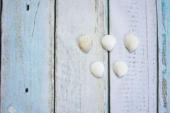Sea shells form olympic rings. On wooden background Stock Image