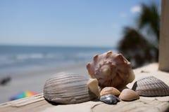 Sea shells found near Garden City, NC royalty free stock image
