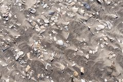 Sea Shells Fragments on Sand. Close-up of a lot of sea shells fragments scattered over sand of a tropical beach stock image