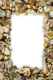 Sea shells frame Royalty Free Stock Photography