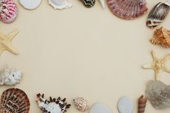 Sea Shells Frame on Neutral Ivory Backgroundwith Copy space for Text. Nautical and Marinne Concept. Royalty Free Stock Image