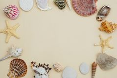 Sea Shells Frame on Neutral Ivory Backgroundwith Copy space for Text. Nautical and Marinne Concept. Sea Shells Frame on Neutral Ivory Backgroundwith Copy space Stock Photo