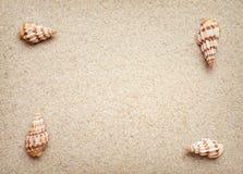 Sea shells frame on sand Stock Photo