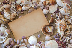 Sea shells. Frame. Stock Photography