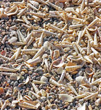 Sea Shells Galore Royalty Free Stock Image