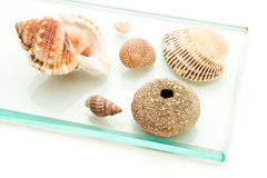 Sea shells on glass Royalty Free Stock Photography