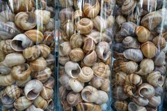 Sea shells in glass vases