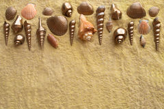 Sea Shells on Golden Sand Royalty Free Stock Photo